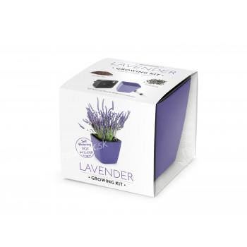 Vypestujte si levanduľu, darčeková sada sa samozavlažovacím kvetináčom, FIALOVÝ 13x13 CM, Domestico