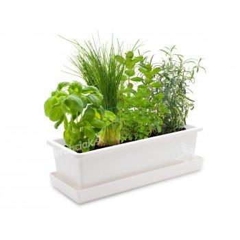 Vypěstuj si bylinkový mix, truhlík bílý 40 cm, Domestico