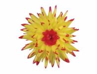 Kvet voskový JIŘINA KAKTUS žlto červený 15cm