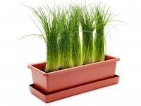Vypěstuj si pažitku, truhlík terracota 40 cm, Domestico