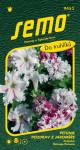 Semo Petúnia veľkokvetá - Pozdrav z Jaroměře 50p