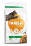 Iams Cat Adult Lamb 2kg
