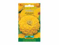 Osivo Ostálka lepá jiřinkokvětá, žlutá