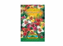 Tigridia pavon/tygřice8ks Gardenia