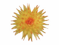 Květ voskový JIŘINA KAKTUS žluto oranžový 15cm