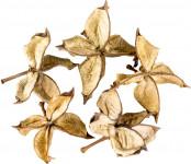 Dekorácie - Cotton Flower - 5 ks
