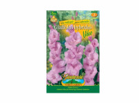 Gladiolus VIDEO 6ks Gardenia