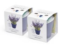 Vypěstuj si levanduli 1+1 set, samozavlažovací květináče 10x10 cm, Domestico