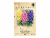 Hyacint zahradní, směs 3ks