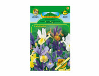 Iris hollandica – kosatec směs Standard 10 ks