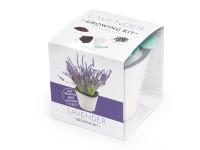 Vypestujte si levanduľu, samozavlažovací kvetináč biely 10x10 cm, Domestico