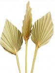 Dekorácie - Palmový list v tvare oštepu 4 ks