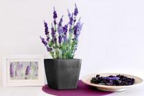 Vypestujte si levanduľu, samozavlažovací kvetináč tmavo strieborný 13x13 cm, Domestico