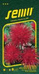 Semo Astrovka čínska - ihlicovitá Electric červená 0,5g