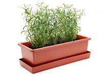 Vypěstuj si rozmarýn, truhlík terracota 40 cm, Domestico