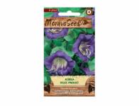Kobea seed - Climbing wreath, purple 00670 - VÝPREDAJ