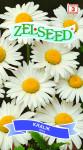Seva Zelseed Margaréta veľkokvetý - biela 0,7g