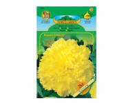 Begonia žlutá Standard 2ks
