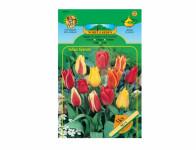 Tulipán Greigii, směs 5ks