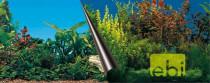 Pozadie akvarijné Beauty + Sea dôvo + 80 x 40 cm - VÝPREDAJ