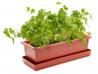 Vypěstuj si petržel, truhlík terracota 40 cm, Domestico