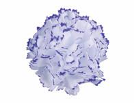 Kvet voskový KARAFIÁT bielo fialový 9cm
