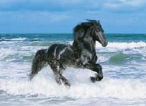 Puzzle 500 dílků Kůň v moři