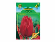 Tulipán triumph SEADOV 5ks