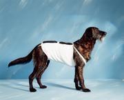 Bandáž brušnej pre psov č.5, dĺžka 55cm Henry Schein - VÝPREDAJ
