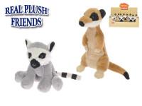 Lemur 14 cm/surikata 15 cm plyšová - mix variant či barev
