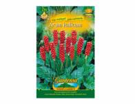 Arum Italicum Aron 2ks Gardenia
