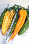 Paprika - Volský roh (10 semien)