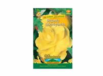 Begonia žlutá Gardenia 2ks