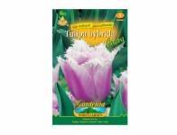 Tulipán třepenitý, crispa CANOVA 4ks
