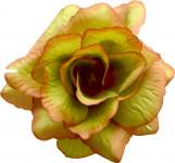 Ruže látková - zelenkavá - 24 ks