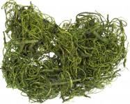 Dekorace - Curly Moss 2 - 30 g jablkově zelený