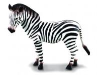 Zebra - mláďa