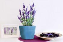 Vypestuj si levanduľu, modrý kvetináč Rains, GreenSun