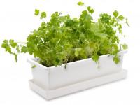 Vypěstuj si petržel, truhlík bílý 40 cm, Domestico