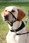 Training harness TRIXIE Top Trainer L-XL (1pc) - VÝPREDAJ