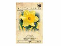 Narcis zahradní, velkokorunný CARLTON 4ks