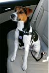 Postroj pes Bezpečnostné do auta S Zolux