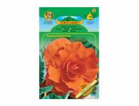 Begonia oranžová Gardenia 2ks