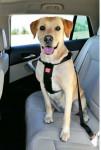 Postroj pes Bezpečnostné do auta L Zolux