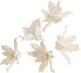 Dekorace - Sola Gardenia 6 cm - 5 ks