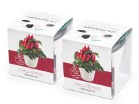 Vypěstuj si jalapeño 1+1 set, bílé samozavlažovací květináče 10x10 cm, Domestico