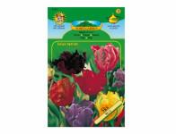 Tulipán papouškovitý, směs 5ks