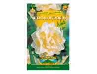 Narcis zahradní, plnokvětý WHITE LION 4ks