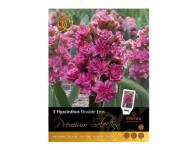 Hyacint zahradní DOUBLE EROS 3ks