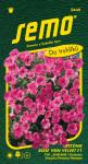 Semo Petúnia previsnutá - Rose Vein Velvet F1 (typ surfinia) 10p